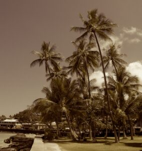 The Timeless Beauty of the Kona Waterfront